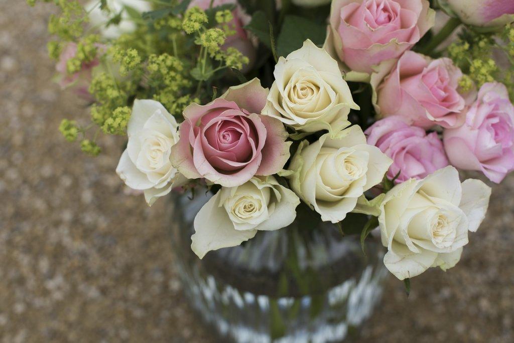 sposób, jak dbać o różę