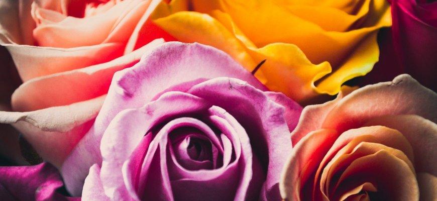 Kwiaty na dzień babci i dziadka